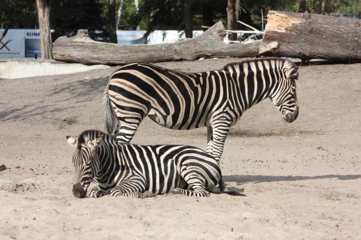 Wrocławskie zoo i Afrykarium